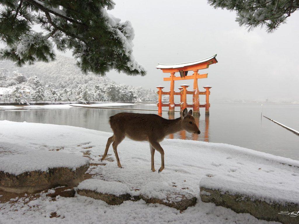 厳島神社 大鳥居と鹿